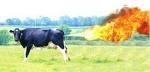 pet de vache.jpg