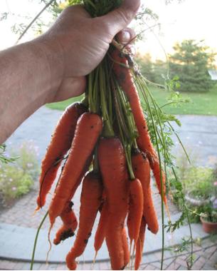 hommes tenant carotte.jpg