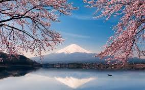 cerisiers et fuji.jpg