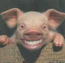 cochon dents longues.jpg